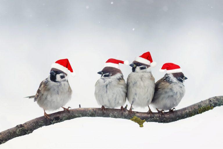 Kerstdiner op Eerste Kerstdag in De Stek